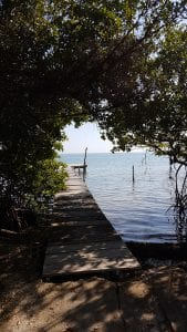 Wooden dock leading through trees onto the water