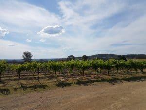 Vineyard at Emma's Cottage Hunter Valley